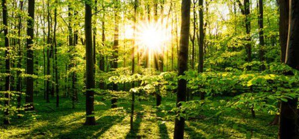 Gewinn aus dem Verkauf von Waldboden muss versteuert werden